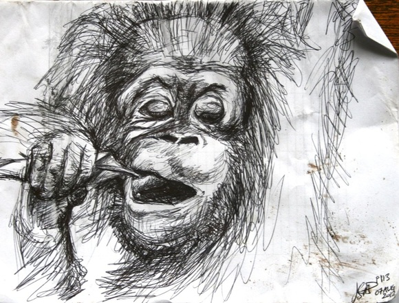 Baby orangutan chewing on a leaf, sketch by Jess Stitt 2012